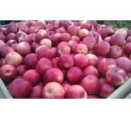 Яблоки сорта Флорина