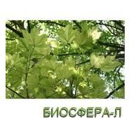 Клен несправжньоплатановий Леопольді (Acer pseudoplatanus Leopoldii)