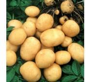 Картофель Гранада, упаковка 3 кг