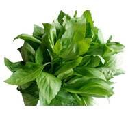 Зелень для ресторанів (рукола, м'ята, базилік, розмарин)