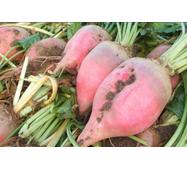 Буряк кормовий Київський рожевий за 30 г (ЕБК-4)