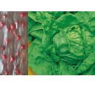 Дражированные семена на ленте Салат кочанный Верна (ЕСЛ-18) за 5м/уп.