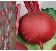 Дражированные семена на ленте Свекла Детройт (ЕБР-26) за 5м/уп.