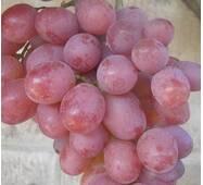 Виноград Сиреневый туман (ІВН-54)