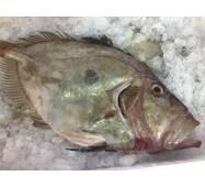 Рыба охлажденная - Солнечник 1+