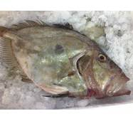 Риба охолоджена - Сонячник 1+