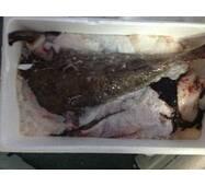 Риба охолоджена - Морский біс б/г 1+
