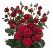 Троянда Спрей Торнадо (ІТЯ-259)