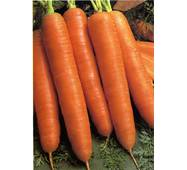 Морковь Королева осени (ЕМР-46) по 5 м/уп.