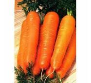 Морква Червоний гігант за 20 г (ЕМР-3В)