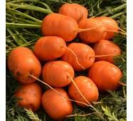 Морква Паризький ринок за 1 г (ЕМР-25)