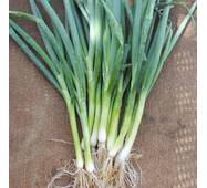 Цибуля-батун П'єро (ЕЦБ-41) насіння драж.  на стрічці
