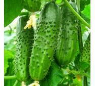 Огірок Ніжинський (ЕОГ-18) за 1 г