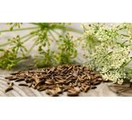Екстракт насіння кмину купити в Україні