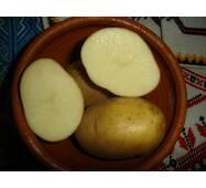 Картофель органический купить недорого