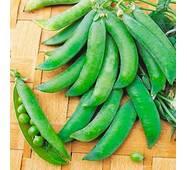 Горох овочевий Бінго (ЕГХ-11В) за 20 г