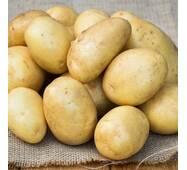Картофель Орла 1 репродукция сетка 5кг.