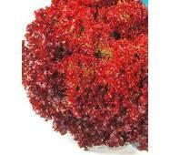 Семена салата Лолло Роса (имп.)