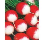 Семена редиса Красный с белым кончиком (Укр)