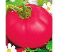Семена томатов Розовый слон