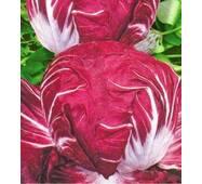 Семена салата Пола Росса (имп)
