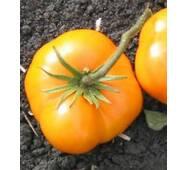 Семена томатов Медвежья лапа желтая