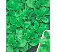 Семена салата Валерианелла салатная