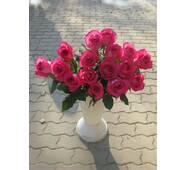 Саженцы чайно-гибридных роз Топаз