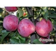 Саджанці яблуні Флорина