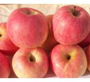 Саджанці яблуні Фуджі