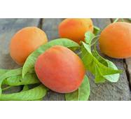 Саджанці абрикоси Червонощокий