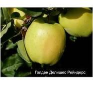 Саджанці яблуні Голдан Рейнджерс