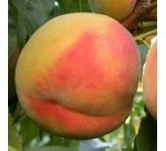 Саджанці персика Вардени