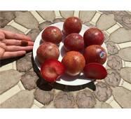 Колоновидный слива-абрикоса ШЕДЕВР