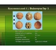 Буковинский1(ПРИВИТЫЙ) 2-х летний