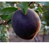 Саджанці абрикоси сорт Чорний принц