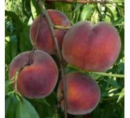 Саджанці персика сорт Рич Мей