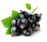 ОЛІЯ КІСТОЧКИ ЧОРНОЙ СМОРОДИНА (Blackcurrant oil refined)