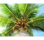 Пальмова олія, водорозчинна