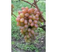 Виноград Преображение (ІВН-28)