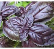 Базилік фіолетовий за 0,3 г (ЕБЗ-2)