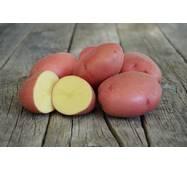 Картопля Ред Леді за 4 кг (ІКР-161-4)