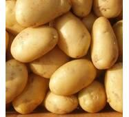 Картопля Бельмондо за 4 кг (ІКР-163-4)