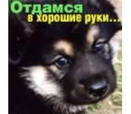 Гуманитарна ветеринарна консультацiя, фоп