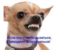 Дресирування собак з проблемною поведінкою