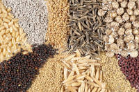 Пропонуємо недорогокупити посівний матеріал