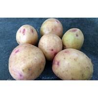 Картопля Княгиня за 4 кг (ІКР-116-П4)