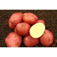 Картопля Белла Роза за 4 кг (ІКР–9-П4)