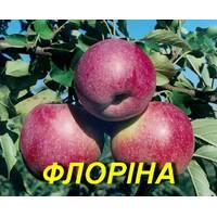 """Саженец яблони """"Флорина"""" 2 г."""
