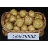 Картопля Скарбниця (ІКР-62-П4) за 4 кг